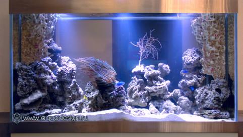 Классический-аквариум_2