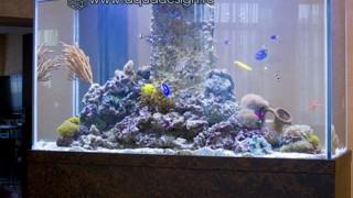 Нестандартные аквариумы и террариумы_2