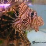 Океанический аквариум_4