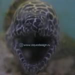 Океанический аквариум_9