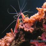 Рифовый аквариум_10