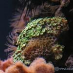 Рифовый аквариум_11