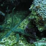 Рифовый аквариум_2