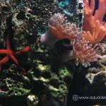 Рифовый аквариум_24
