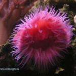 Рифовый аквариум_37