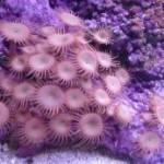 Рифовый аквариум_39