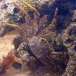Рифовый аквариум_45