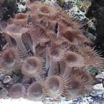 Рифовый аквариум_5
