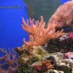 Рифовый аквариум_7
