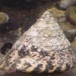 Рифовый аквариум_8