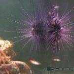 Рифовый аквариум_9