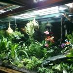 Купить настенный флорариум в Москве