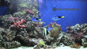 Отдельно стоящий морской аквариум
