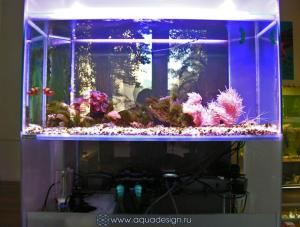 Морской аквариум с кораллами