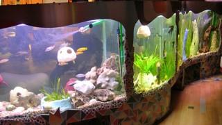 Изогнутый аквариум