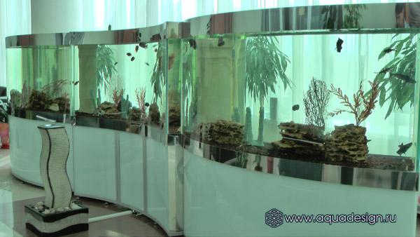 Эксклюзивный аквариум – Изогнутый Аквариум