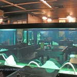 Эксклюзивный аквариум – аквариум на просвет