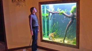 аквариум окно