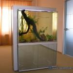 Аквариумы-ширмы и аквариумы-перегородки