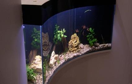 Эксклюзивный аквариум – с вогнутым фасадом