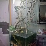 Акватеррариум «Флора»