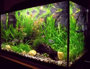 Статьи об аквариумах и другом оборудовании