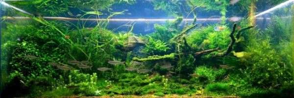 Аэрация и фильтрация в аквариуме