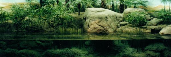 Оборудуем аквариум под растения