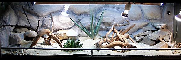 Игуаны в домашнем террариуме