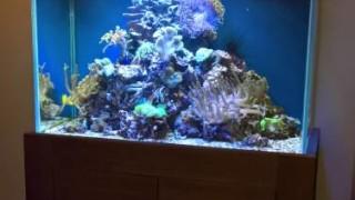 морские (4)