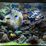 риф 3 метра (1)