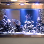 Морской аквариум купить в Москве