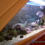 Океанический аквариум_2