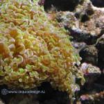 Рифовый аквариум_14