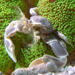 Рифовый аквариум_15