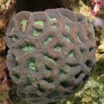 Рифовый аквариум_23
