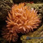 Рифовый аквариум_26
