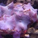 Рифовый аквариум_28