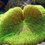 Рифовый аквариум_30