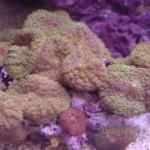 Рифовый аквариум_32