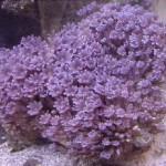 Рифовый аквариум_38