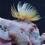 Рифовый аквариум_40