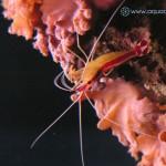Рифовый аквариум_42