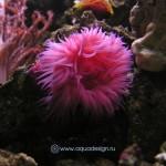 Рифовый аквариум_49