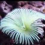 Рифовый аквариум_52