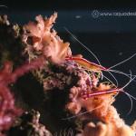 Рифовый аквариум_6