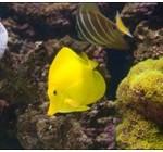 Обитатели аквариумов и террариумов