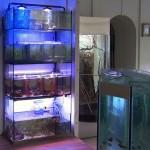 аквасистема «Стеллаж»