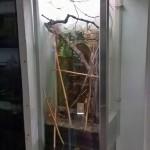Акватеррариум «Бахчисарайский фонтан»