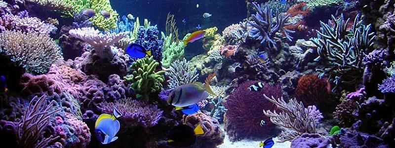 kak-krasivo-oformit-akvarium-1